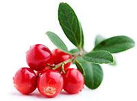 Cranberry-Saft: Gesundes Plus im Wodka-Eispop
