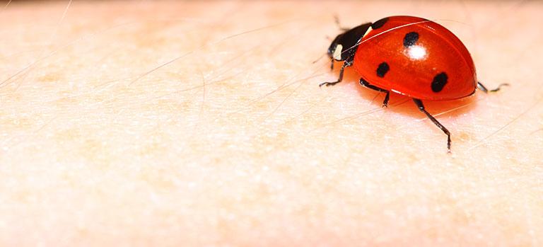Bild 130030184 copyright Voyagerix, 2013 Mit Genehmigung von Shutterstock.com