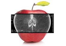 Ungeeignet und schädlich: Apfelkerne.