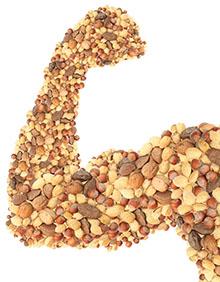 Proteine: Wichtig für den Muskelaufbau
