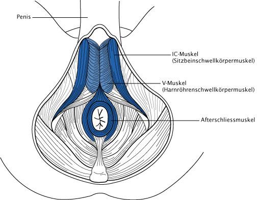 beckenbodenmuskulatur männer