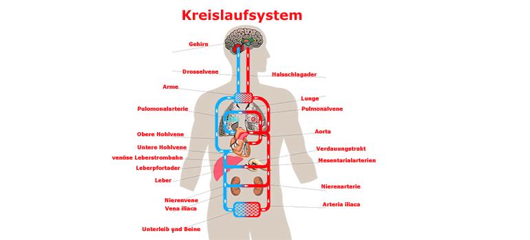 Der neurogene Schock bei Querschnittlähmung