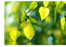 Bild 101047141 copyright isak55, 2013 Mit Genehmigung von Shutterstock.com