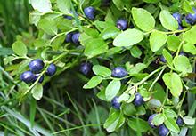 Bild 110233037copyright Taiftin, 2013 Mit Genehmigung von Shutterstock.com