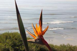 Die Strelitzie wird auch Bird of Paradise oder Papageienblume genannt