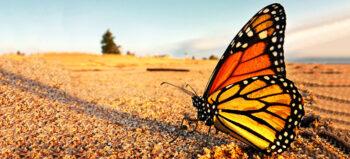 Wings for Life – Die Organisation