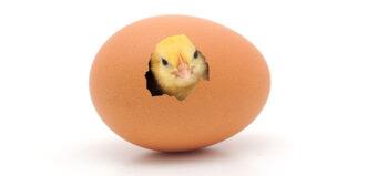 Was tun bei Hühnereiweißallergie?
