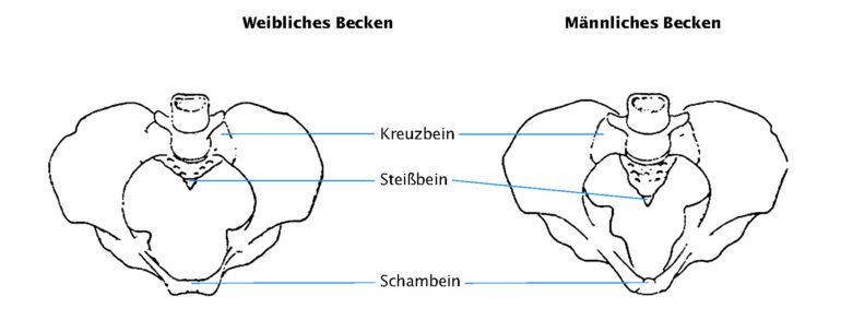 Abb. 3 Knöchernes Becken Frau+Mann
