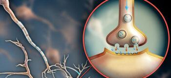 Aufbau von Axonen im Corticospinaltrakt (CST) möglich
