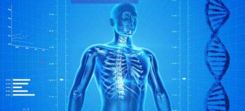 Gleichzeitig angewendete Elektro- und Magnetstimulation verbessert die Gehfähigkeit bei Patienten mit Querschnittlähmung