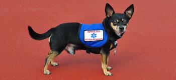 Tiergestützte Therapie in der Rehabilitation bei Querschnittlähmung