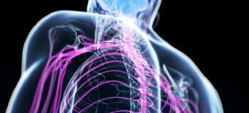 Nerventransposition kann bei Tetraplegikern Muskeln unterhalb der Lähmungshöhe re-aktivieren